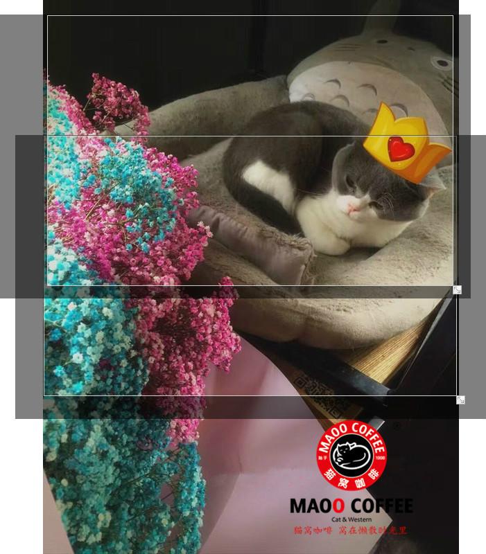 【猫窝课程】猫窝咖啡携手DS鲜花工作室带你走进插花课