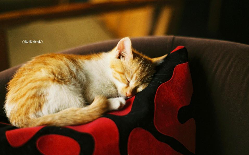 【猫窝新闻】为你量身打造咖啡梦想