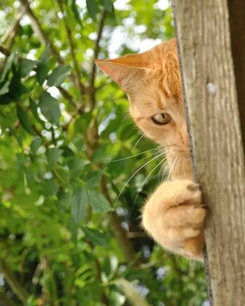 【治愈系猫书】人生总会有办法的喵