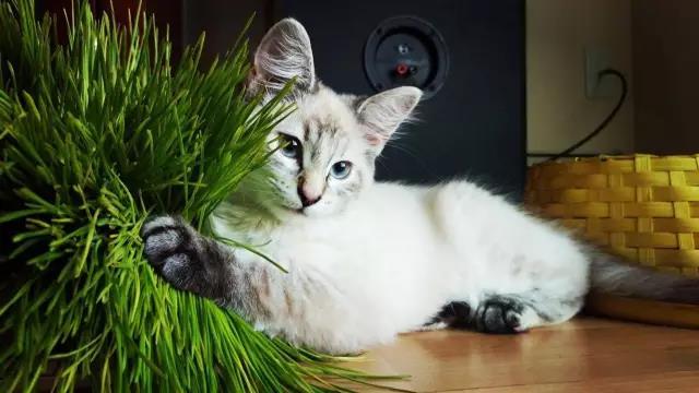 猫星人评选|秀出你的猫咪